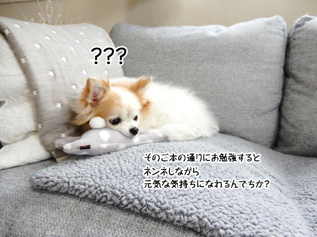 寝ながら勉強できるの?