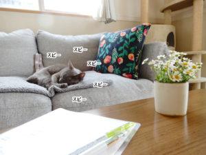 勉強中に健やかな寝息