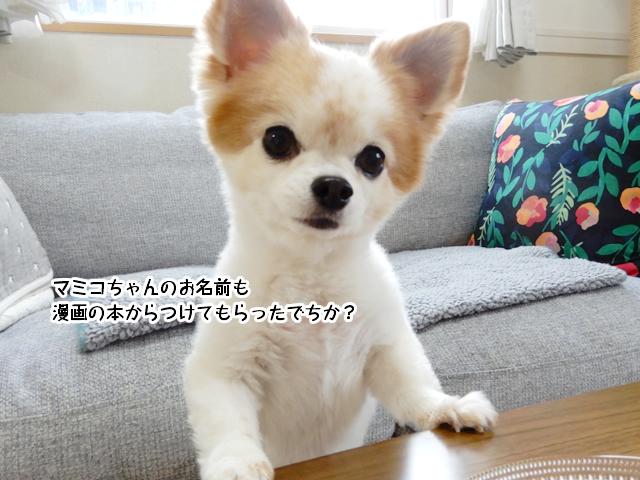 マミコちゃんも漫画本から名前をつけてもらったの?
