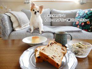 ふかふかパンとトロトロプリンを前にした仁くん