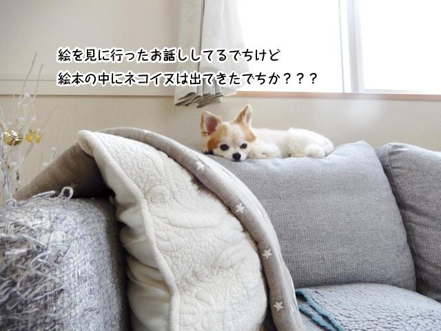 ネコイヌはいましたか?