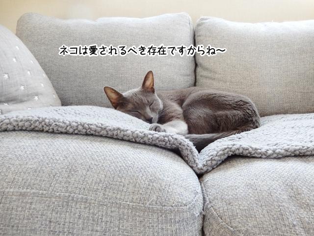 ネコは愛されるべき存在です