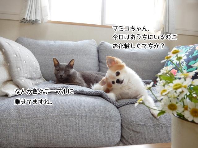 耳をカリカリする仁くんとソファーで寛ぐギンちゃん