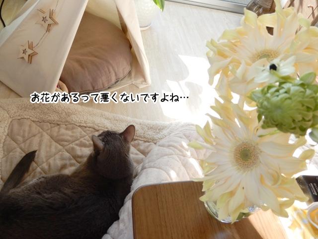 お花とギンちゃん