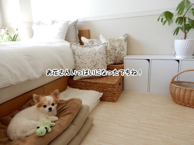 仁くんベッドで快適な仁くん