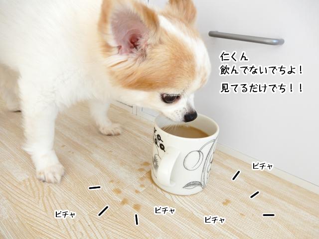コーヒーを飲む仁くん