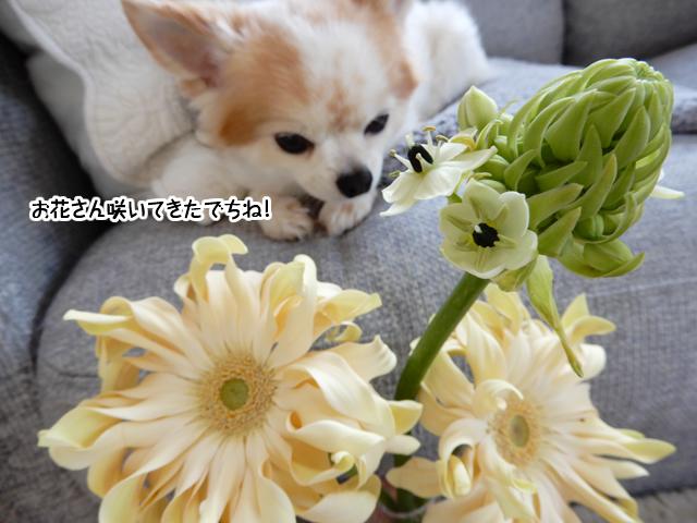 お花を見ている仁くん