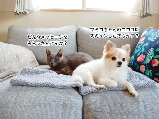 マミコちゃんの心にズキュンのメッセージもらったの??
