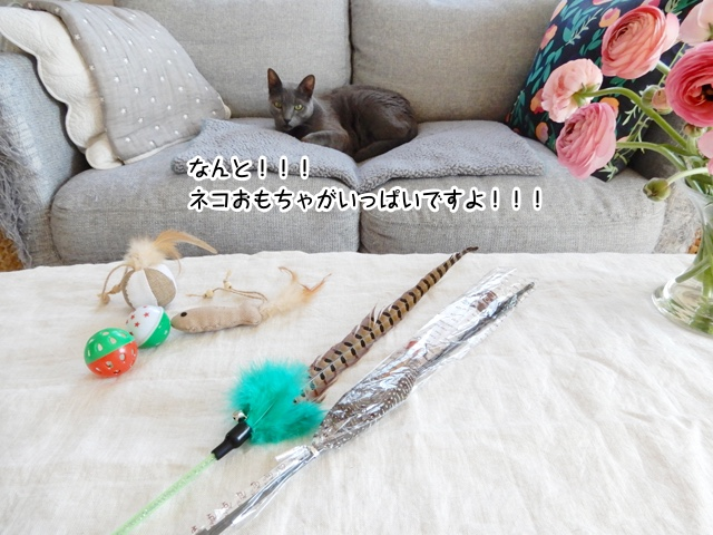 ネコおもちゃがいっぱいですよ!