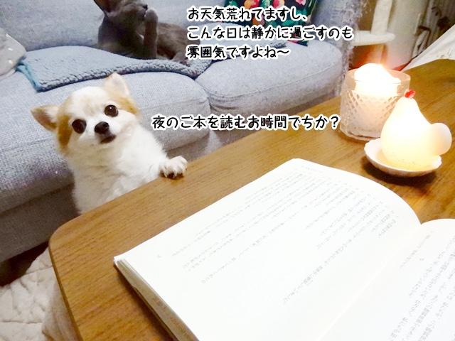 お天気悪いし、今日は読書がいいですよね