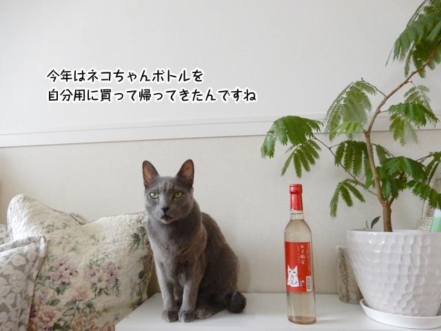 猫ちゃんのお酒とギンちゃん
