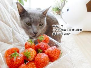 女子は酸っぱ甘い果物好きですよね