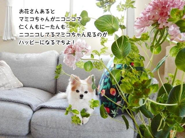お花さんあるとマミコちゃんがにこにこで、それを見るにーたんと仁くんもハッピーなんでち