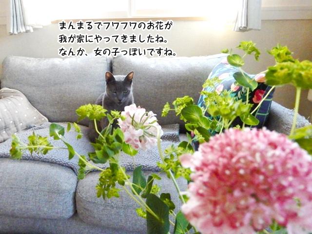 ふわふわのお花ですね