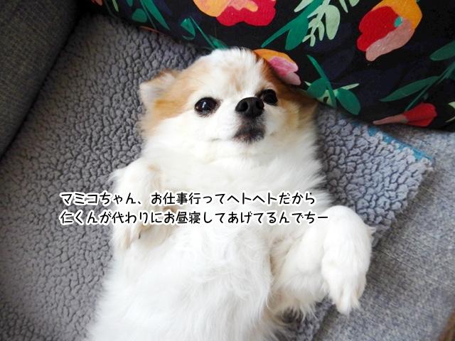 マミコちゃんの代わりにお昼寝するでちーー