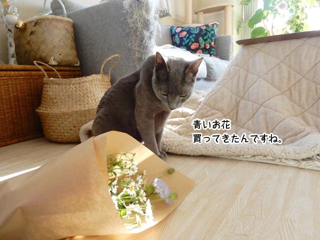 青いお花買ってきたんですね