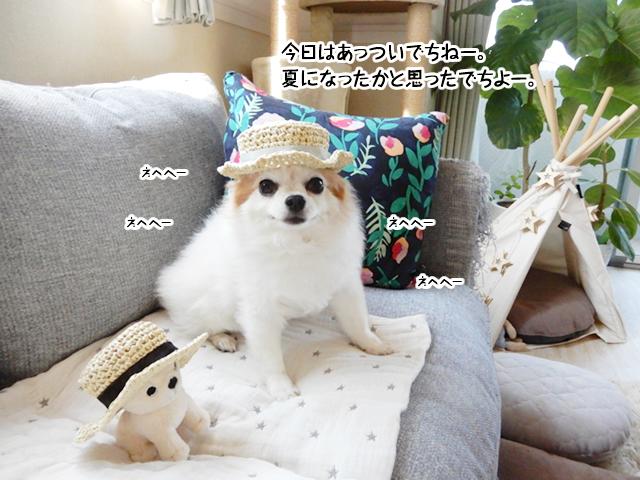 夏のお帽子でちー