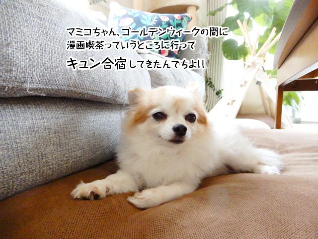 マミコちゃん、漫画喫茶って言うところでキュン合宿したんでちよ!