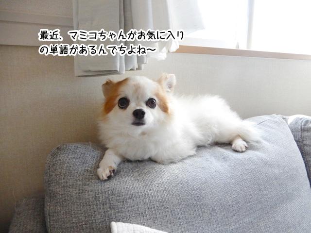 最近、マミコちゃんがお気に入りの言葉があるんでちよね〜