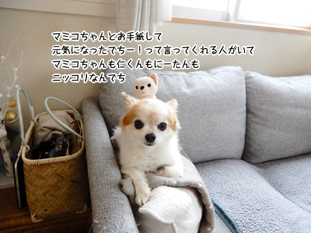 マミコちゃんとお手紙して元気になった人がいるってみんなで喜んでるんでち