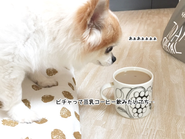 あぁ、豆乳コーヒー飲みたいでち
