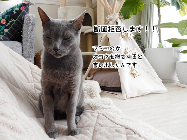 マミコがオコタを撤去すると言い出したんです