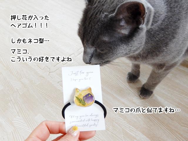 押し花が入ったヘアゴム!しかもネコ型!