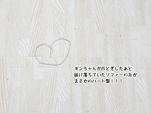 ギンちゃんが爪とぎしたあと抜け落ちていたソファーの糸がまさかのハート型!!!