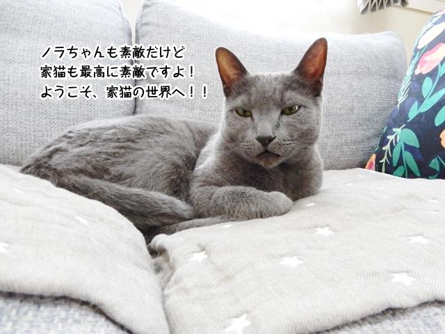 ノラちゃんも素敵だけど家猫も最高に素敵ですよ!ようこそ、家猫の世界へ!