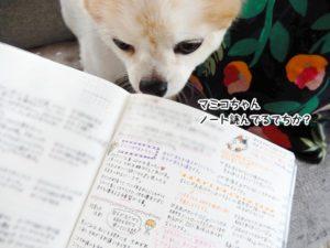 マミコちゃん、ノート読んでるでちか?