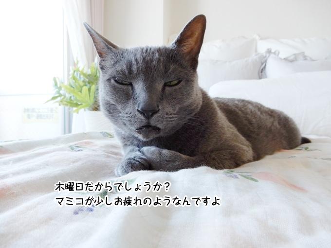 木曜日だからでしょうか?マミコが少しお疲れのようなんですよ。
