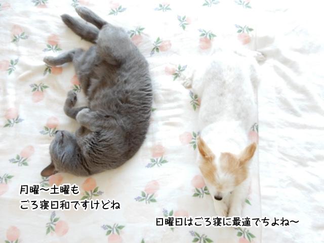 月曜〜土曜もごろ寝日和ですけれど、日曜日はごろ寝に最適でちよね!