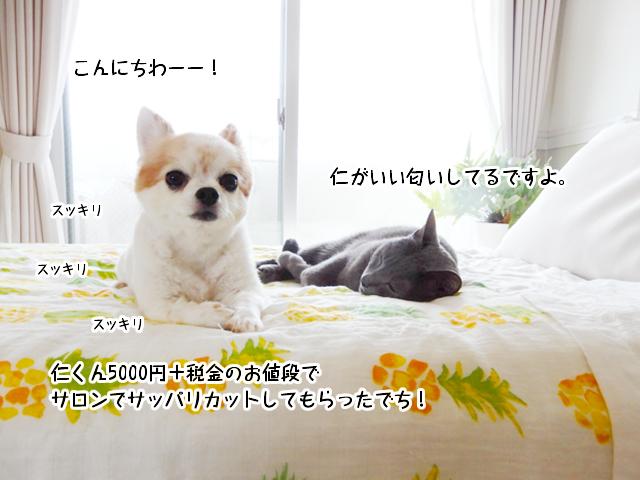 仁くんは5000円+税金でサッパリカットしていい匂いしています