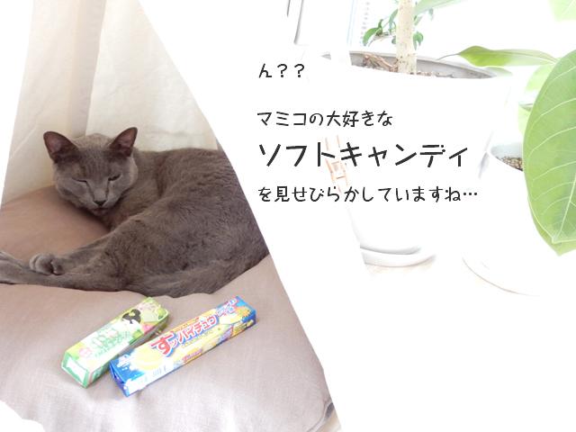 マミコの大好物・ソフトキャンディを見せびらかしてますね