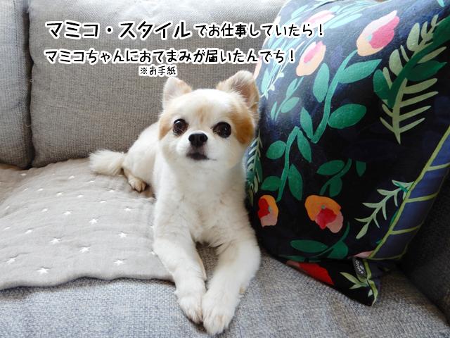 マミコ・スタイルでお仕事していたらマミコちゃんにお手紙が届いたんでち!