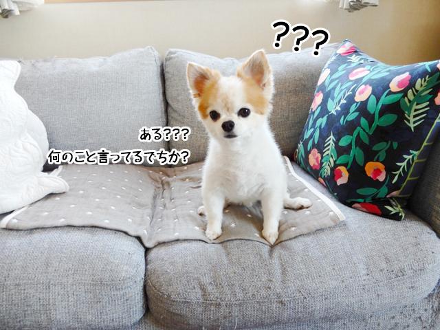 ある???何のこと言ってるでちか?