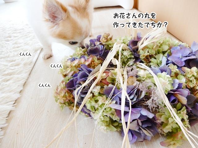 お花さんの丸作ってきたでちか?