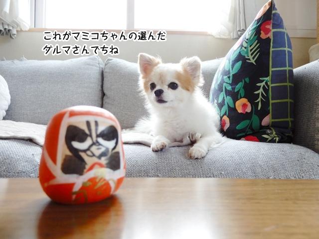 これがマミコちゃんの選んだダルマさんでちね