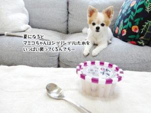 夏になるとマミコちゃんはショリショリした氷をいっぱい買ってくるんでちー