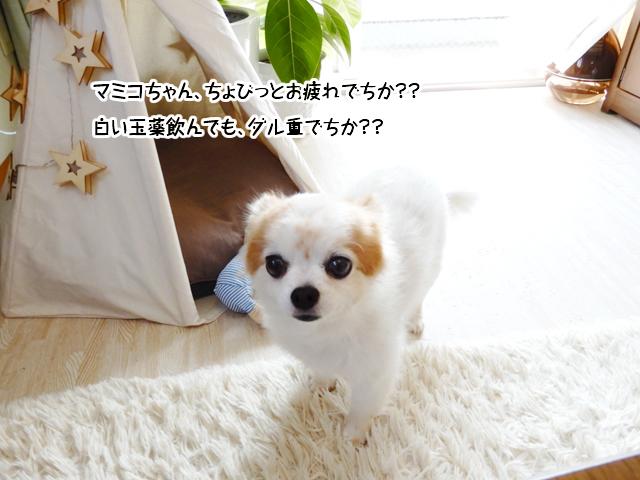 マミコちゃん、ちょびっとお疲れでちか?白い玉薬飲んでもダル重でちか??