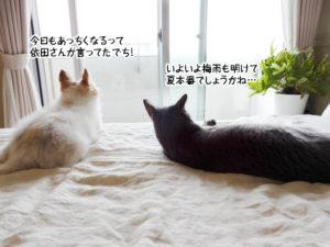 今日もあっちくなるって依田さんが言ってたでち!いよいよ梅雨も明けて夏本番でしょうかね…