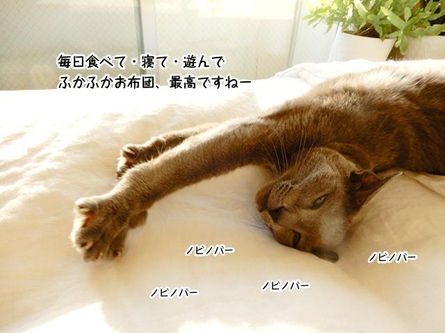 毎日食う・寝る・遊ぶで、ふかふかお布団最高ですねー