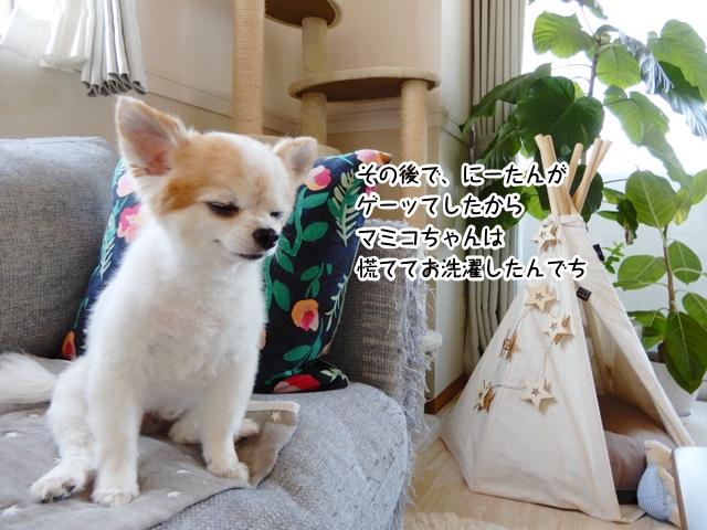 その後でにーたんがゲーッてしたから、マミコちゃんは慌ててお洗濯したんでち。
