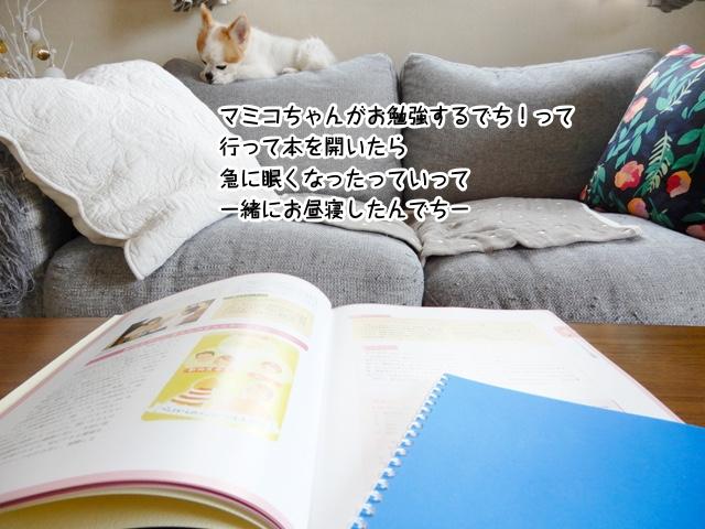 お勉強しようとして本を開いたらマミコちゃんが眠くなってみんなでお昼寝したんでちー