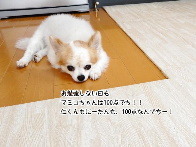 お勉強しない日もマミコちゃんは100点でち!!仁くんもにーたんも、100点なんでちー!