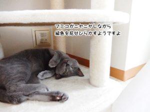 マミコがニヤニヤしながら緑色を見せびらかすようですよ