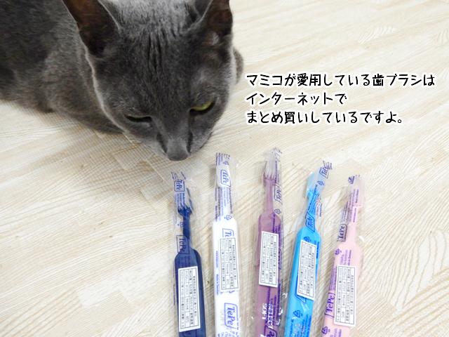 マミコが愛用している歯ブラシはインターネットでまとめ買いしているですよ。