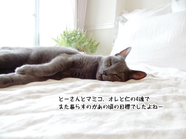 とーさんとマミコ、オレと仁の4魂でまた暮らすのがあの頃の目標でしたよねー