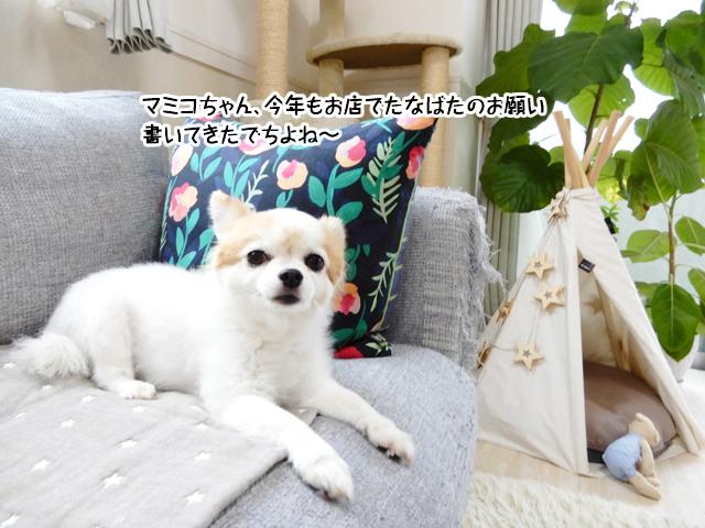 マミコちゃん、今年もお店でたなばたのお願い書いてきたでちよね~