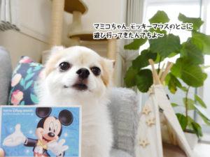 マミコちゃん、モッキーマウスのとこに 遊び行ってきたんでちよ~